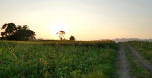 Luz de la tarde en campo del girasol Fotos de archivo