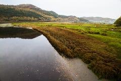 Luz de la tarde, río, País de Gales Imagen de archivo libre de regalías