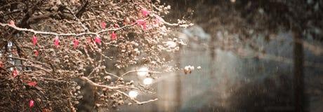Luz de la tormenta de la nieve Fotografía de archivo