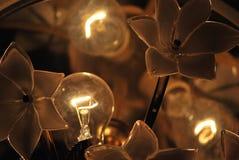 luz de las flores Fotos de archivo libres de regalías