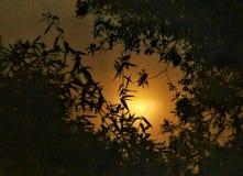 Luz de luna fotos de archivo libres de regalías