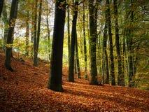 Luz de octubre Foto de archivo libre de regalías