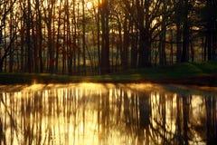 Luz de oro Imagenes de archivo