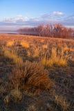 Luz de oro del prado Foto de archivo libre de regalías