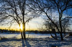 Luz de oro de la hora de la puesta del sol a través de las ramas de árbol fotos de archivo libres de regalías
