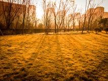 Luz de oro por la mañana Fotografía de archivo
