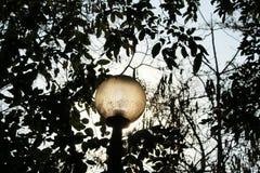 Luz de rua Foto de Stock Royalty Free