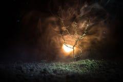 luz de rua assustador na névoa da árvore, ramos da noite de árvore em um fundo nevoento do fogo Escuro - laranja tonificada fotografia de stock