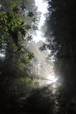 Luz de Spriitual Imagens de Stock