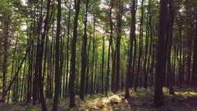 Luz de Sun en bosque verde almacen de metraje de vídeo