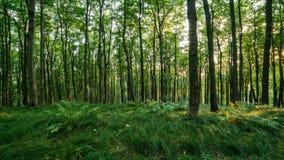 Luz de Sun en lapso de tiempo verde del bosque almacen de video