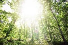 Luz de Sun entre los árboles Foto de archivo libre de regalías