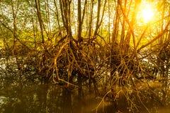 Luz de Sun na floresta Fotos de Stock