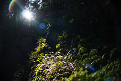 Luz de Sun que fluye a través de los árboles Fotografía de archivo libre de regalías