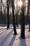 Luz de Sun a través de los árboles Foto de archivo