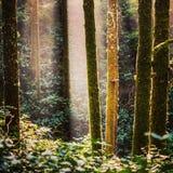 Luz del árbol Imagen de archivo