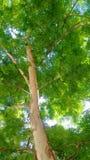 Luz del árbol imágenes de archivo libres de regalías