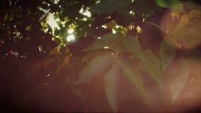 Luz del bokeh del verde de la falta de definición de la naturaleza con mirada ascendente del toldo de las hojas Fondo borroso con almacen de video