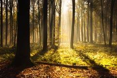 Luz del bosque imagenes de archivo