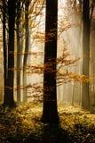Luz del bosque Fotografía de archivo