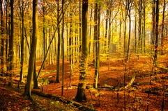 Luz del bosque Fotos de archivo