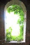 Luz del exterior con las hojas Imagenes de archivo