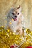 Luz del festival con el perro Imagen de archivo