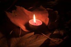 Luz del otoño Imagen de archivo libre de regalías