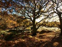Luz del otoño, silueta de la naturaleza Imágenes de archivo libres de regalías
