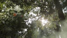Luz del sol almacen de video