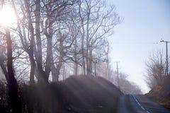 Luz del sol baja del invierno que fluye a través de árboles Fotografía de archivo