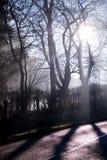 Luz del sol baja del invierno que fluye a través de árboles Imagen de archivo