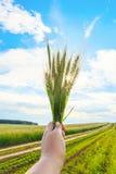 Luz del sol brillante a través del trigo en una mano del ` s de la mujer contra un cielo nublado azul y un camino de tierra a tra Imagenes de archivo