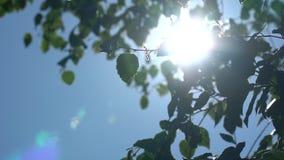 Luz del sol brillante a través del follaje verde del abedul Cámara lenta en toldos de árboles con los fragmentos del cielo metrajes