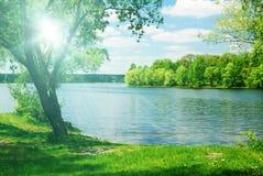 Luz del sol brillante y árbol verde Fotos de archivo
