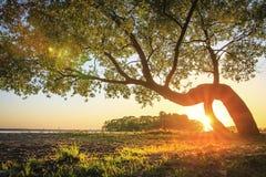 Luz del sol caliente con los rayos a través del tronco del árbol verde en la orilla del río cubierta de la hierba que brilla inte imagenes de archivo