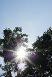Luz del sol de la llamarada a través del árbol Imagenes de archivo