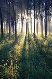 Luz del sol de la mañana Imagen de archivo