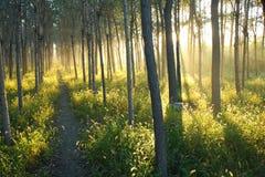 Luz del sol de la mañana Fotos de archivo libres de regalías