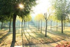 Luz del sol de la mañana Imagen de archivo libre de regalías