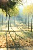 Luz del sol de la mañana Foto de archivo libre de regalías