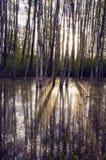 Luz del sol de la mañana del resorte en el bosque Imagen de archivo libre de regalías