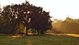 Luz del sol de la mañana que fluye de detrás un árbol imágenes de archivo libres de regalías