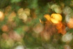 Luz del sol del fondo de la naturaleza de Bokeh a través de las hojas en verde del árbol Fotos de archivo
