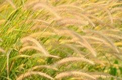 Luz del sol del impacto de la hierba de la flor Foto de archivo libre de regalías