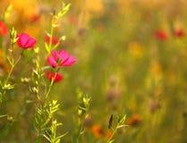 Luz del sol del otoño Fotografía de archivo libre de regalías
