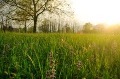 Luz del sol del resorte sobre prado Imagenes de archivo