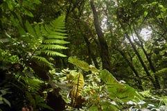 Luz del sol del suelo del bosque Fotos de archivo libres de regalías
