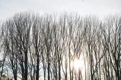 Luz del sol en árboles Imagen de archivo libre de regalías