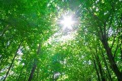 Luz del sol en árboles del bosque Imágenes de archivo libres de regalías